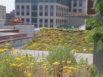 ASLA Green Roof